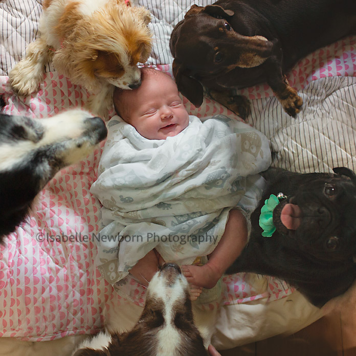 1 cute baby and 5 fur children