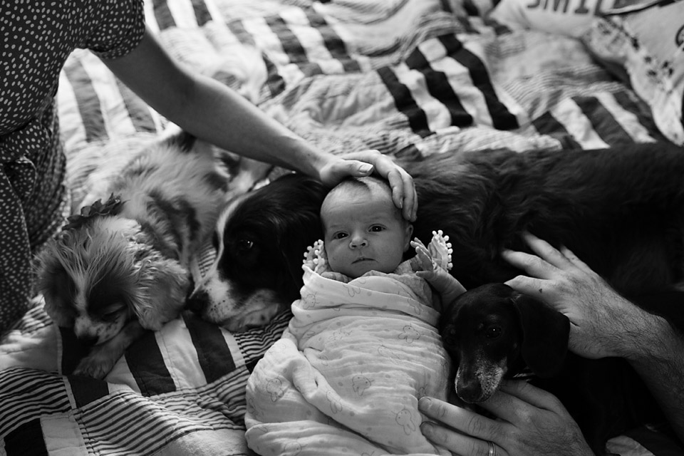 brisbane newborn shoot with dogs
