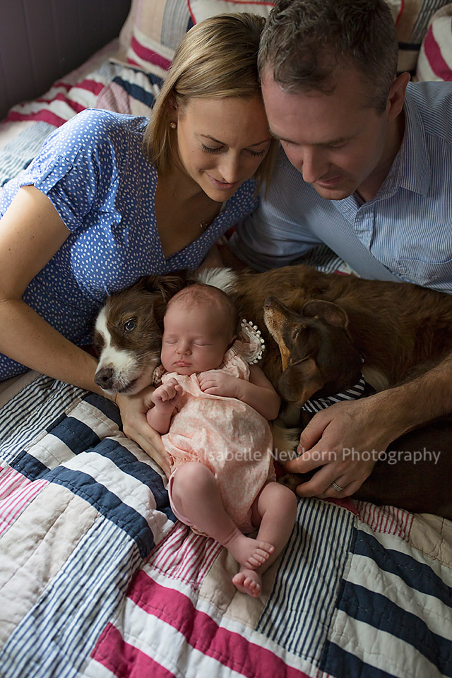 brisbane newborn shoot and dogs
